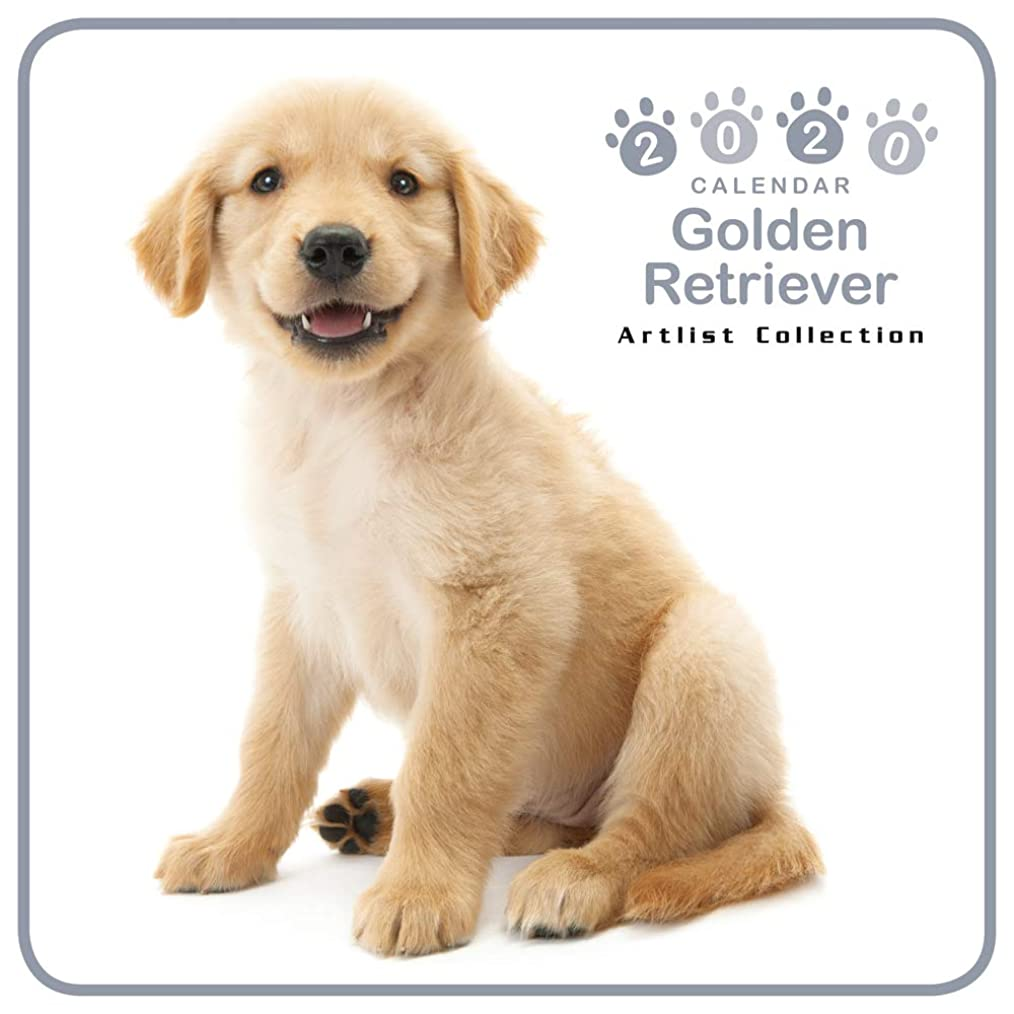 法医学不足政令カレンダー 2020 ミニサイズ 壁掛け ゴールデン?レトリーバー (ミニ) 403351 ノーマルレンズシリーズ 2019年9月-2020年12月 アーリスト イヌ いぬ Golden Retriever