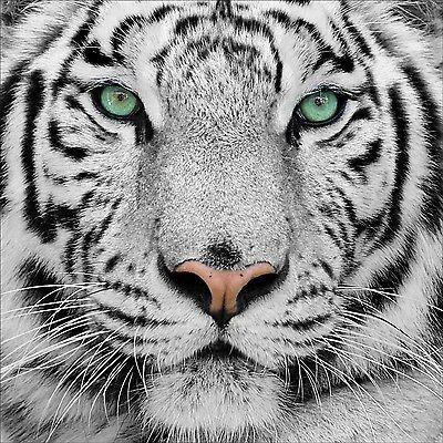 Decooo.be-Adesivo da parete adesiva, motivo: Tigre, dimensioni (rif. 1273 25), 30x30cm