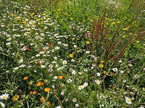 20qm Blumenwiese als Wildkräuter Mischung fünfjährige Bienenweide, insektenfreundlicher Garten wilde mehrjährige winterharte Blühwiese für Bienen Hummeln und Schmetterlinge, Geschenk Geburtstag Einzug