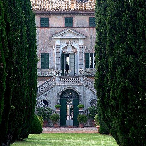 semences d'arbres rares 30 CYPRESS ITALIEN (Cupressus sempervirens) Arbre, arbre bonsaï pour les planteurs de fleurs en pot