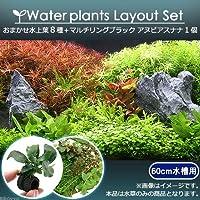 (水草)おまかせ水上葉 レイアウトセット 60cm水槽用 8種 +マルチリングブラック アヌビアスナナ 北海道航空便要保温