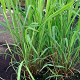 NutsnCones Plants, Seeds & Bulbs