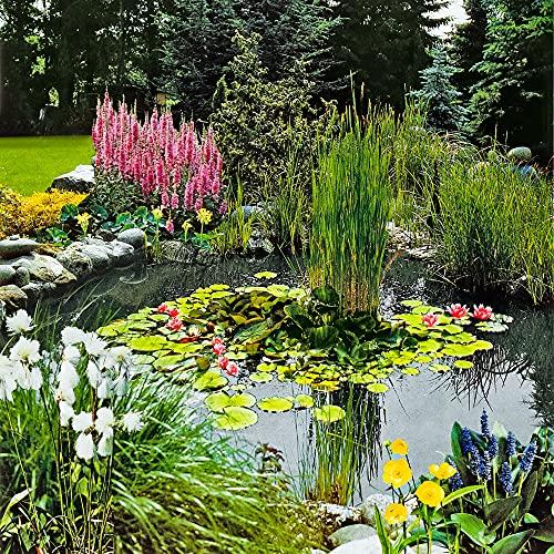 plante aquatique ikea