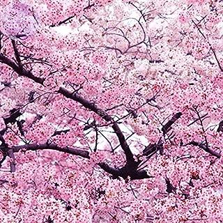 2018 Hot Sale Davitu Japanese Pink Cherry Blossom Sakura Tree, 20 Seeds, Oriental Sweet Prunus Flower Seeds E3752