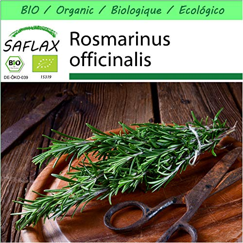 SAFLAX - Jardin dans la boîte - BIO - Romarin - 40 graines - Avec pot en argile, support, substrat de culture et engrais - Rosmarinus officinalis