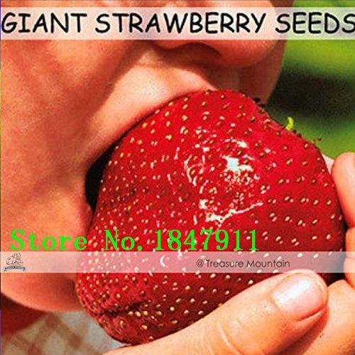 Nouveaux Big vente Livraison gratuite 100 graines/Paquet, Super Géant Strawberry Fruit Graine Pomme grande taille rouge foncé