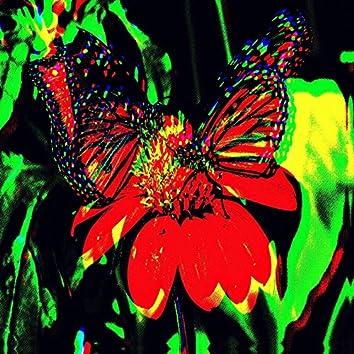 Dead Butterflies Invasion