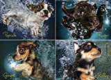 WILLOW CREEK PRESS Underwater Puppies Jigsaw Puzzle (1000-Piece)