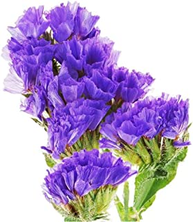 Statice Limonium sinuatum Blue Chinese Forget Me Not Flower 100 Seeds