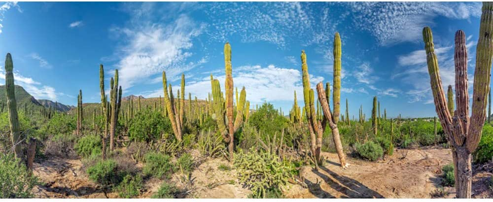 Renaiss Rare 12x6ft Tropical Cactus Terrarium Blue wit Sky Background Max 58% OFF