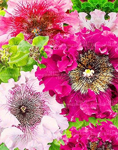 200pcs Fold Graines Petunia Petunia Pack Professionnel froid Hardy chaleur Tolerant mélange de fleurs magnifiques
