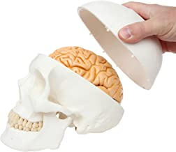 Axis Scientific 3-Part Human Skull Model with Removable 8-Part Brain   Life Size Plastic Skull is Molded from a Real Human Skull   Includes Detailed Product Manual   3 Year Warranty