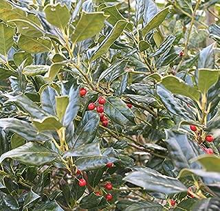 Best plant sapling online Reviews