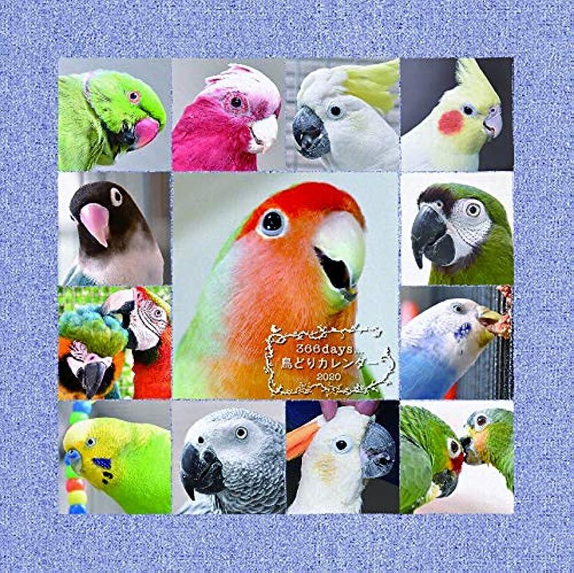 柔らかい足参加者政治2020年版 366days 鳥どりカレンダー