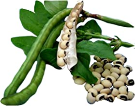 Black Eyed Peas - 20 Seeds , The Black Eyed Peas, Pea Seeds For Planting, Non Gmo , Organic Heirloom Seeds, Vegetable Garden Seeds For Planting, Pea Plant Seeds.