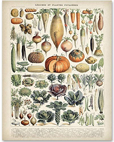 Antique Heirloom Vegetables - 11x14 Unframed Art Print - Makes a Great Kitchen Decor and Gift Under $15 for Farmers and Vegetable Planters