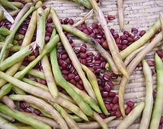 50 Seeds Adzuki Bean