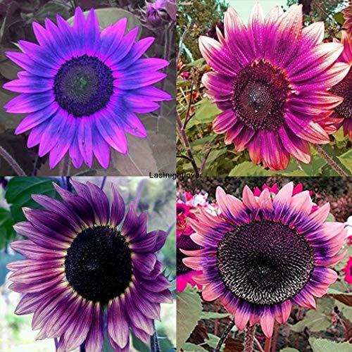AGROBITS Type 6: Belle Ornement de Fleur Jardin Pourpre Iloé