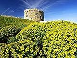 Puzzle 1000, Puzzle para Adultos, Rompecabezas de Madera 1000 Piezas Paisaje Natural de Menorca de Gran tamaño 1000 Piezas de Rompecabezas de Madera, Decoraciones hogar
