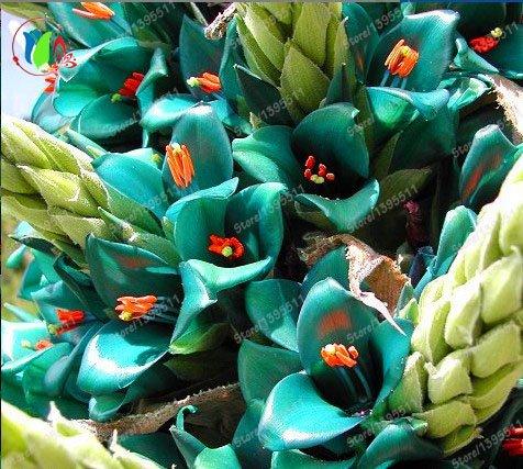 nouveau broméliacées géant, graines rares broméliacées 50pcs, fleurs turquoise vibrant, bleu électrique, la sécheresse, le jardin à la maison