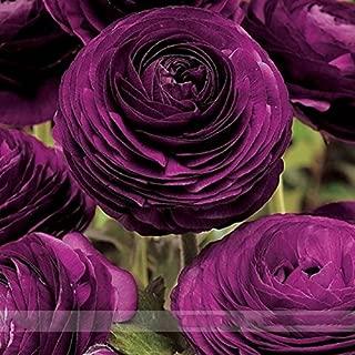 Best zone 11 flowers Reviews