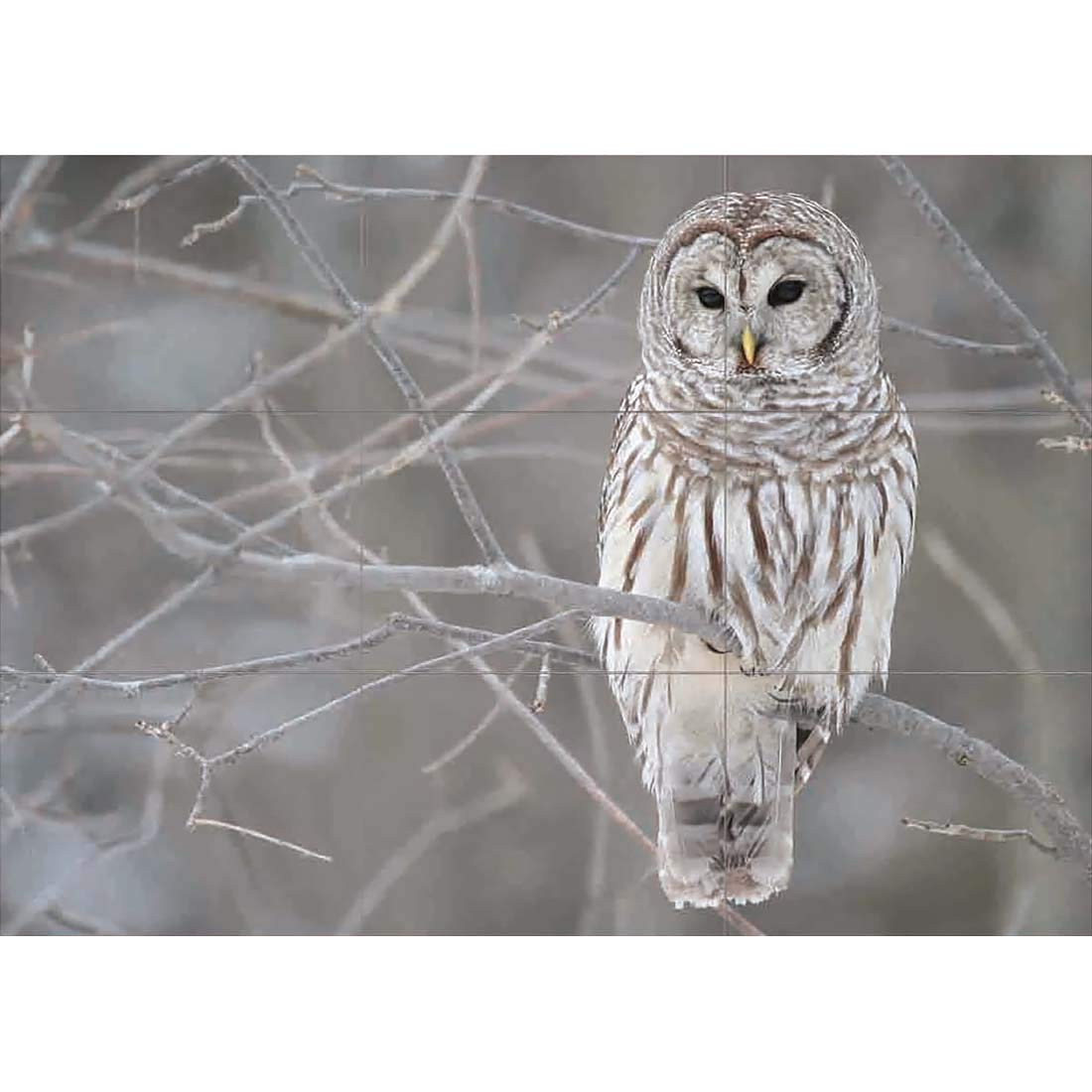 Snowy Owl Wildlife Large Wall Art Poster Print