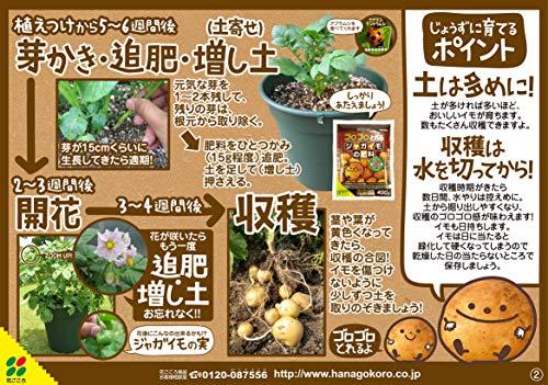 花ごころ ジャガイモの肥料 400g
