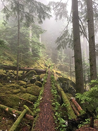Hiking with Valentine - Sea to Summit Trail [OV]