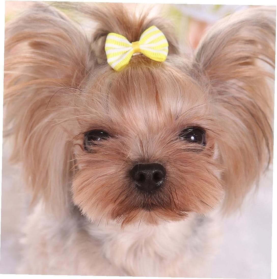 5 Pcs Pet Dog Hair Clip Online limited product Teddy Max 57% OFF Cute Bow Headdress Striped Poodle