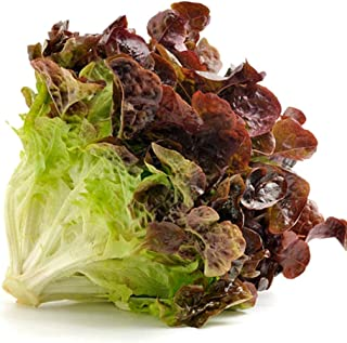 Best red ruby lettuce Reviews