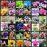 VENTE! 200pc Orchid papillon Graines, 36 variétés de graines Bonsai belles fleurs, d'orchidées ornementales seniors