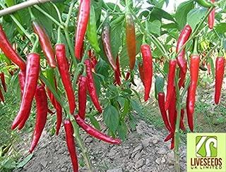 kashmiri chilli seeds