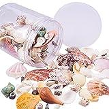 PandaHall Seashells della Spiaggia di Modo Conchiglia per la Decorazione del mestiere e monili Fai da Te, Colore Misto, nessun Foro, 12-73x5-45mm, Circa 350g …