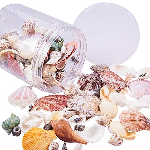 PandaHall 350 g de Conchas Marinas a la Moda Mixta Conchas de Playa para Manualidades, decoración del hogar, Fiestas temáticas de Playa, decoración de Boda, Tanque de Pescado y jarrón Rellenos