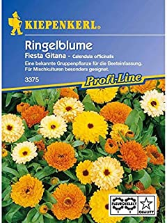 Calendula officinalis Ringelblume Fiesta Gitana Mischung