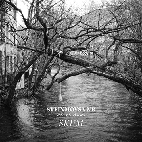 Steinmøysa NB