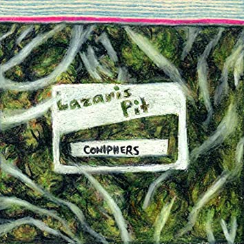 Coniphers