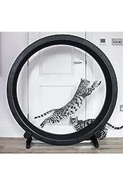 Amazon.es: rueda ejercicios - Gatos: Productos para mascotas