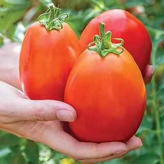Best bonnie plants hybrid tomatoes Reviews