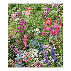 PREMIER SEEDS DIRECT - Flower Mix - Shade - Native and New World ANNUALS - 10GM - 7 SQ Meters