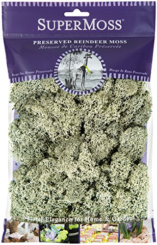 SuperMoss (25116) Reindeer Moss Preserved, Moss Green, 2oz