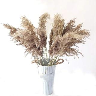 20 Pcs Dried Plants Pampas Grass Natural phragmites communis Wedding Flower Bunch raw Color