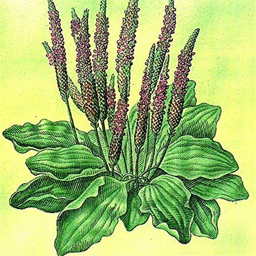 1bag = 3pcs rare desert rose graines réelle Thaïlande Adenium obesum semences fleur plante bonsaï mini-arbre fleur géante