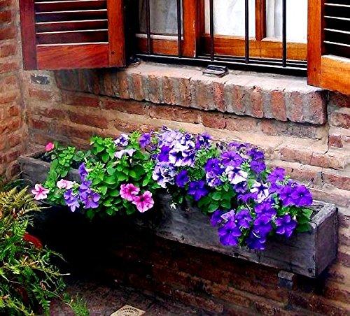 Petunia Ultra Blue Seeds - Petunia X Hybrida Grandes Fleurs
