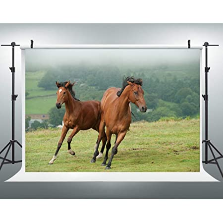 CdHBH 7x5ft Old Wild West Stable Backdrop Texas Western Cowboy Horse in Barn Anvil Tree Trunk Lantern Saddle Mews Photography Background Travel Party Events Photo Studio Props