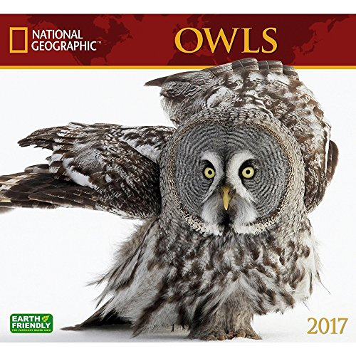 National Geographic Owls - 2017 Calendar 13 x 12in