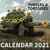 Turtles & Tortoises Calendar 2021: November 2020 - December 2021 Square Photo Book Monthly Planner Calendar With Turtles & Tortoises Photography