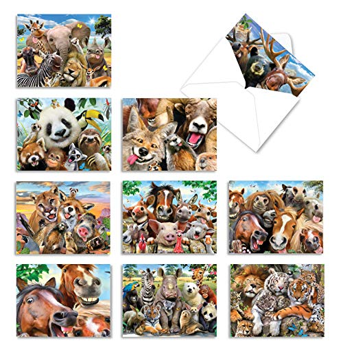 Assortment of 10 Funny Blank Note Cards Featuring Animals Being Goofy - 'Here's Looking at Zoo' Stationery Set of Greeting Cards 4 x 5.12 inch with Envelopes - Cards for Any Occasion M6639OCBsl