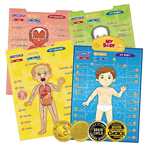BEST LEARNING i-Poster mi Cuerpo - Juego Educativo Interactivo de anatomía Humana para Aprender Partes del Cuerpo, órganos, músculos y Huesos para niños de 5 a 12 años (Versión en inglés)