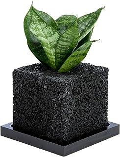 【eco-pochi】葉サンセベリア × エコポチ・キューブミニ(角型ミニサイズ) 黒 竹炭やシラスを使った観葉植物用ポッド
